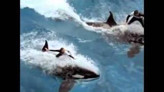 Dawn Brancheau Believe - SeaWorld