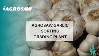 Garlic Sorting Grading Plant