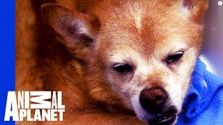 Dog Down! Dr. Jeff and Team Act Fast to Save a Senior Dog