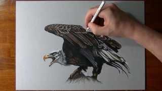 getlinkyoutube.com-How to draw an eagle