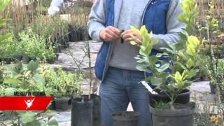 getlinkyoutube.com-MEREU IN FORMA - Lamaiul, totul despre plantare si intretinere