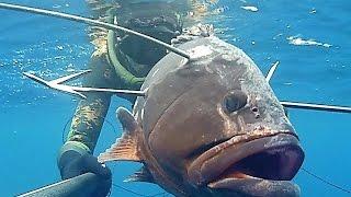 getlinkyoutube.com-Pescasub Sardegna: Cernia 7 kg + 5 kg