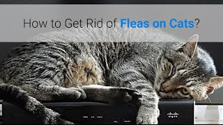 How To Get Rid Of Stray Cats Naturally