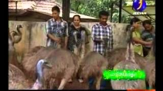 getlinkyoutube.com-V and V emu Farm Haritha keralam part 1 Mob: +91 9744441093 Web: www.vandvemufarm.com