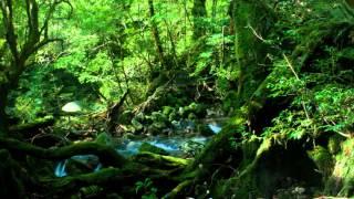 getlinkyoutube.com-やすらぎと癒しのひとときを 自然音とクラシック音楽が織りなすリラックスBGM