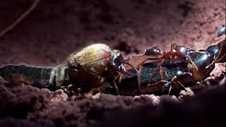 getlinkyoutube.com-Summons of the Queen ant - Ant Attack - BBC
