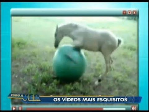 Tudo a Ver 29/08/2011: Veja alguns dos vídeos mais esquisitos da internet
