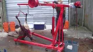 getlinkyoutube.com-Henry sheep skinning machine 2 1