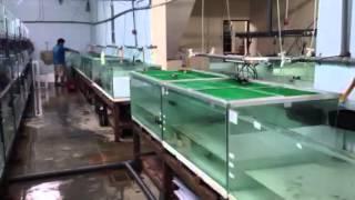 getlinkyoutube.com-โชว่าพาตะลุยฟาร์มปลามังกร ตอน1