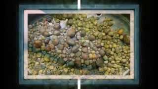 getlinkyoutube.com-কিডনির পাথর দূর করার ঘরোয়া পানীয়