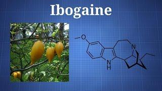 getlinkyoutube.com-Ibogaine and Iboga: What You Need To Know