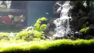 getlinkyoutube.com-Karyaku Air Terjun Aquascape Budi/pondok cabe
