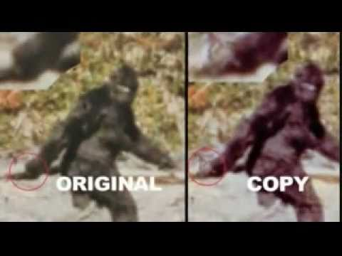 Patterson Gimlin Bigfoot Film- Bill Munns Analysis