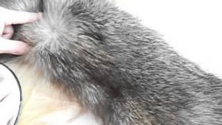 getlinkyoutube.com-Как почистить мех из чернобурки