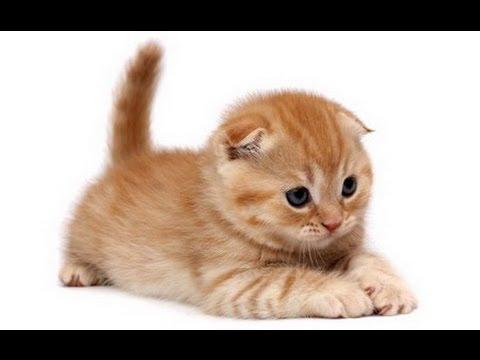 Os gatos mais fofos, carinhosos e lindos do mundo.