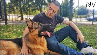 getlinkyoutube.com-A Day With A German Shepherd Puppy | NerdVlog