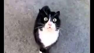 getlinkyoutube.com-Opętany kot
