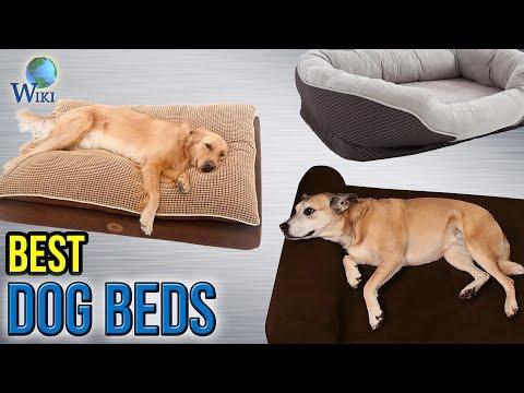 10 Best Dog Beds 2017