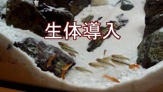 getlinkyoutube.com-石組みレイアウト水槽「雪山」 生体導入 【アクアリウム】
