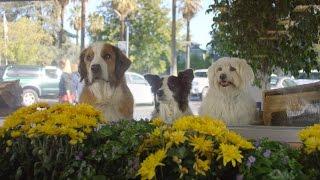 getlinkyoutube.com-Doritos Dogs - Crash the Super Bowl 2016 WINNER OFFICIAL