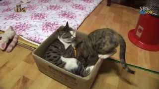 getlinkyoutube.com-SBS [동물농장] - 젖물리는 수컷 고양이 딸랑이의 변심