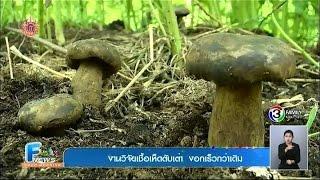getlinkyoutube.com-เกษตร ฮอตนิวส์ | งานวิจัยเชื้อเห็ดตับเต่า งอกเร็วกว่าเดิม  | 30-03-58