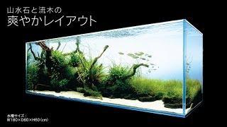 getlinkyoutube.com-[ADAview] AJ226連動-180cm水槽レイアウト スリムウッド編