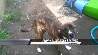 flushyoutube.com-Starving Puppy Rescued From Owners