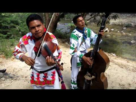 LA ABEJA MIOPE version Huichol CARRILLOS MUSICAL