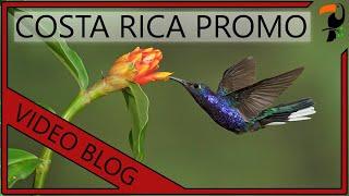 getlinkyoutube.com-Bird Photography Workshop - Costa Rica (With Wildlife Photographer Glenn Bartley)
