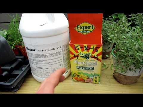 Understanding & Using Water Soluble Fertilizer: Organic 5-1-1 Fish Emulsion & 15-30-15 Chemical Base