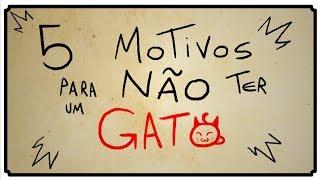 getlinkyoutube.com-5 MOTIVOS PARA NÃO TER UM GATO
