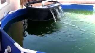 getlinkyoutube.com-Tilapia pond, day 1 w/ DIY Skippy filter