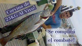 getlinkyoutube.com-Jornada de pesca al vivo: Corvina de 23 kg