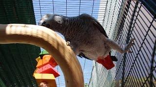 getlinkyoutube.com-Parrot Perches, Stands, & Cage Setup Ideas