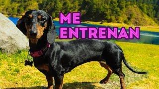 getlinkyoutube.com-ENTRENANDO A ARIA Y KLER | LOS POLINESIOS VLOGS