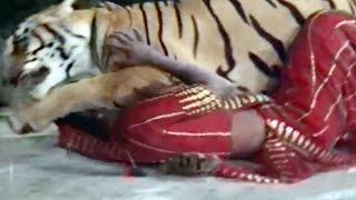 getlinkyoutube.com-Naresh Kanodia Saves Snehlata from Tiger, Hiran Ne Kanthe - Gujarati Action Scene 5/12