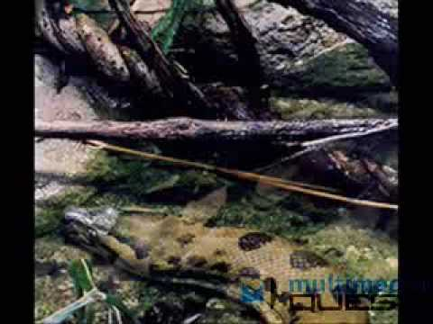 largest anaconda in world. Largest Anaconda