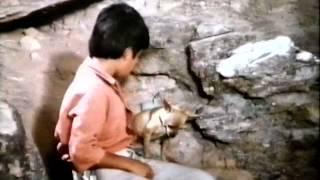 getlinkyoutube.com-Pablo and the Dancing Chihuahua