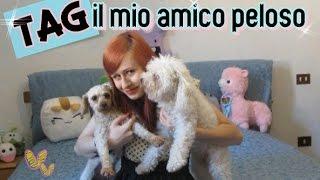 getlinkyoutube.com-TAG: Il mio Amico Peloso :D collab. con Nancy Joli Bijoux