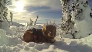 Heli Skiing with Avalanche Rescue Dogs