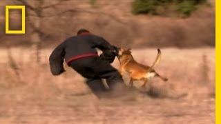 getlinkyoutube.com-Dog Attack Styles | National Geographic