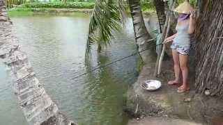 Em gái Miền Tây câu cá rô nhìn sông nước các bác có kích thích ko ạ