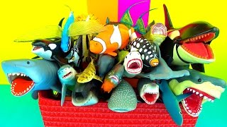 getlinkyoutube.com-Favorite Sharks Whales and Fish - Jaws - Kids Toys - Educational and in English