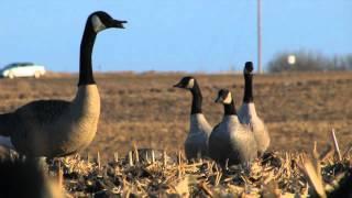 getlinkyoutube.com-Afternoon X Goose Hunt in MN Big Sean Hammock