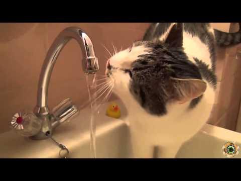 śmieszne filmy koty Besta 2014