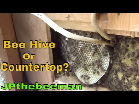Lady Has Bees In Her Kitchen Countertop!