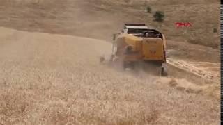 İklim değişikliği, hasat dönemini etkilemeye başladı