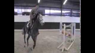 Hilmar Meyer Sporthorses 2013 Cassianos home