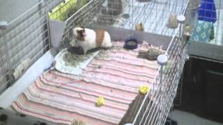 getlinkyoutube.com-5 Creative Things To Do With Your Piggy
